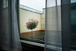 Solitary tree viewed from a room at The Ramada Hotel, Hatfield, Hertfordshire, England, United Kingdom.