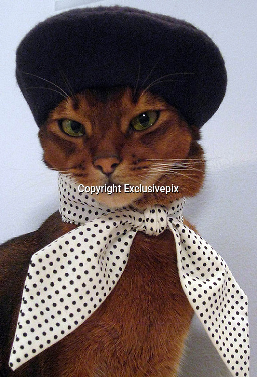 Ready for the Catwalk...the amazing 'haute CAT-ture' for the fashion-conscious feline<br /> <br /> Forget a collar and bell, this stylish feline is turning heads with it's range of glamorous accessories good enough for any catwalk.The amazing 'haute CAT-ture' is the work of New Yorker Julie Song, who painstakingly designs and crafts the garments herself.Working under the alias 'CatAtlelier', Korean-American Julie, 33, has created a wacky range of hats and collars for the fashion-conscious feline.<br /> <br /> The wacky creations include gold headbands, berets, a range of bow-ties and even a top-hat so that prissy pusses have a look for every occasion.The moggy milliner targets her work at the 'fashion-forward feline' and their style-conscious owners.Almost as much work goes into taking the adorable photos of her model and muse, Julie's own cat, three-year-old Abbysinian 'Toki Nantucket'.<br /> Julie, a full-time designer who creates the cat clothes in her spare time, said: 'I think it's really important to prepare everything first - the camera, the area you will be using to take pictures, the lights, props, and the exact accessories or clothes you will use, so your cat is not sitting there wearing all this stuff while you're still fiddling around.<br /> 'I keep photo shoots short so Toki knows it won't be some kind of torture session when I dress him. That way he won't dread wearing clothes.'<br /> And while some supermodels won't get out of bed for less than five thousand dollars, Toki's services can be bought for the more modest price of a few chunks of juicy chicken.<br /> Julie said: 'For Toki, it's really all about the chicken. Toki loves chicken.<br /> <br /> 'I bake chicken and cut it up into bites that I keep in Ziploc bags in the refrigerator and freezer for his treats.'I give him some before each photo shoot, and also immediately after.'The pieces are priced between &pound;6 up to &pound;56 and can take days to make.Talented Julie, an illustration graduate