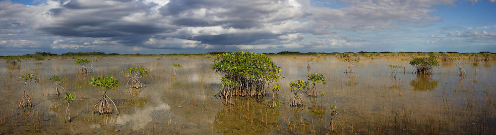 Mangroves colonizing the freshwater marl prairie in the east-central region of the Everglades National Park