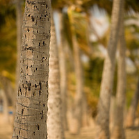 Anaehoomalu Beach and palm tree grove