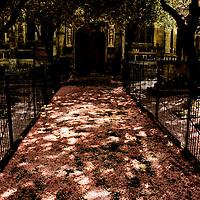 Cherry blossom fallen onto a church path between iron railings with dappled sunlight