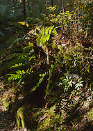 Mosses and ferns catch a ray of sunlight alongside the Milford Track, Fiordland, New Zealand