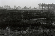 Dutch rural heath landscape Noord Brabant Hapertse Heide