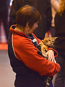 © Licensed to London News Pictures. 24/11/2012. Birmingham, UK Owners wait for the kitten judging competition. Cats are shown by their owners and breeders at The Supreme Cat Show held by the Governing Council of Cat Fancy at the National Exhibition Centre in Birmingham today, 24 November 2012. The Cat Show is one of the largest cat contests in Europe with over one thousand cats being exhibited and judged.Photo credit : Stephen Simpson/LNP