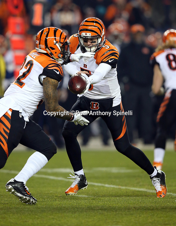 Cincinnati Bengals quarterback AJ McCarron (5) hands off the ball to Cincinnati Bengals running back Jeremy Hill (32) during the 2015 NFL week 16 regular season football game against the Denver Broncos on Monday, Dec. 28, 2015 in Denver. The Broncos won the game in overtime 20-17. (©Paul Anthony Spinelli)