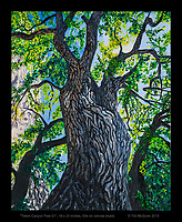 """Tieton Tree"", 16 x 20 inches, oil on canvas. © Tim McGuire 2016"