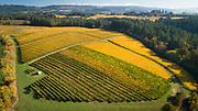 Aerial view over Goldenn fall colors at Patricia Green Cellars estate vineyard, Ribbon Ridge AVA, Willamette Valley, Oregon