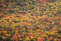 Full Spectrum of Fall Colors Along Kancagamus Highway, White Mountain National Forest, New Hampshire