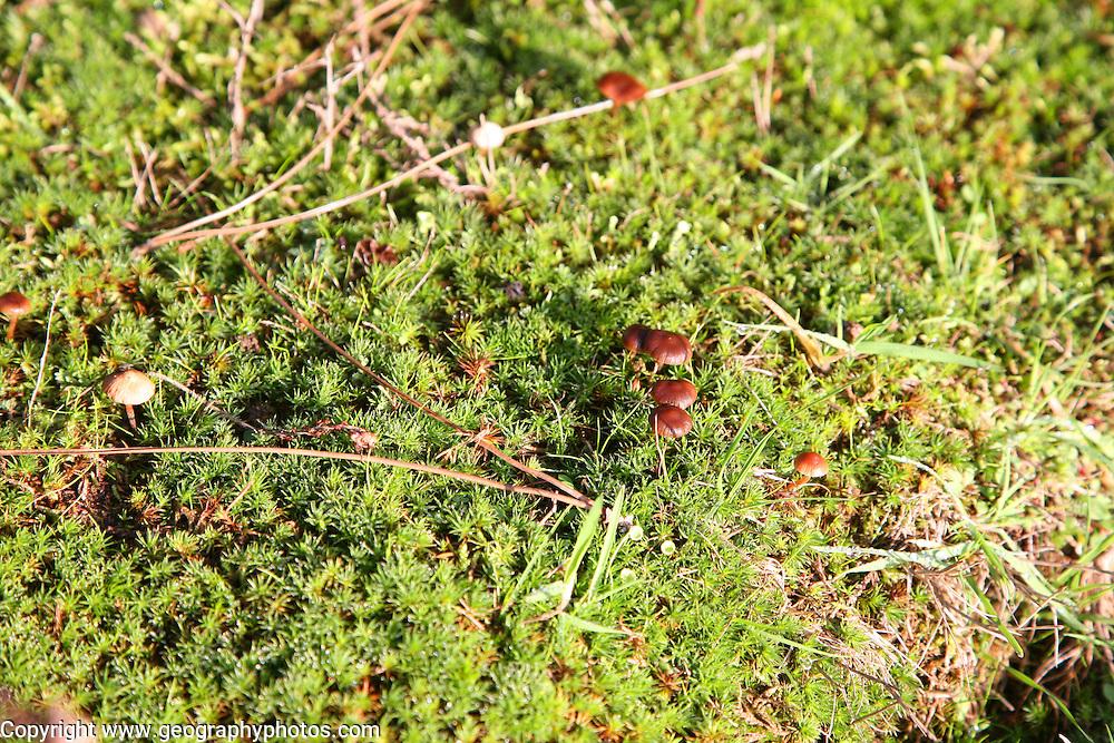 Suffolk Sandlings vegetation in autumn, details of fungus, mosses, grass