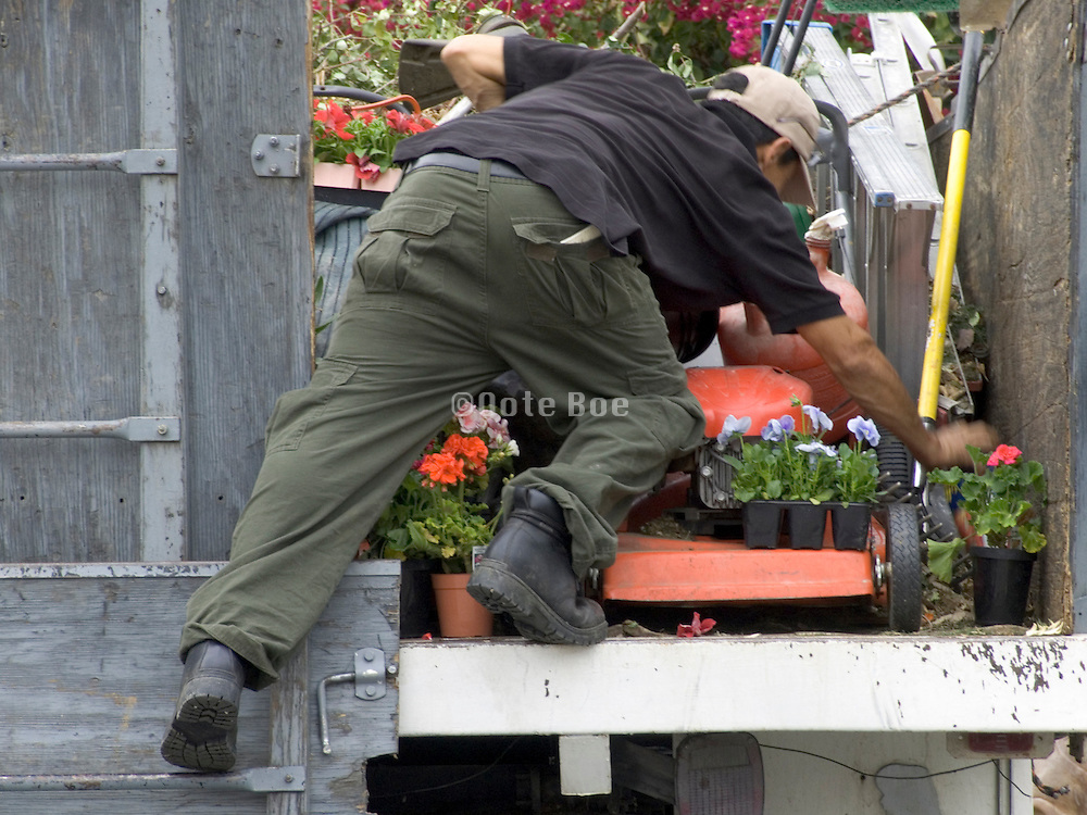garden worker balancing on the back of a truck to get some plants