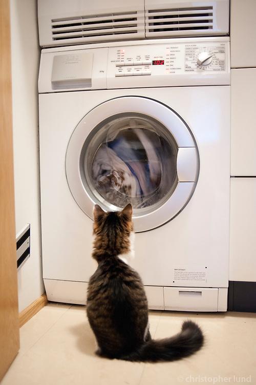 Mikki fylgist með þvottavélinni snúa þvotti. A cat watching a washing machine working.