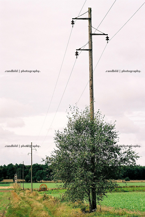 An einem Feldweg wächst eine Birke an einem hölzernen Strommasten empor.