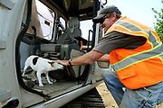 Dennis Cacen pets his Jack Russell terrier, Clairbelle, as he climbs into the cab of an excavator while working in Northeast Portland on Tuesday.  Cacen, a superintendent for Eugene-based Brown Contracting, has been bringing 14-year-old Clairbelle to work with him since she was a puppy.