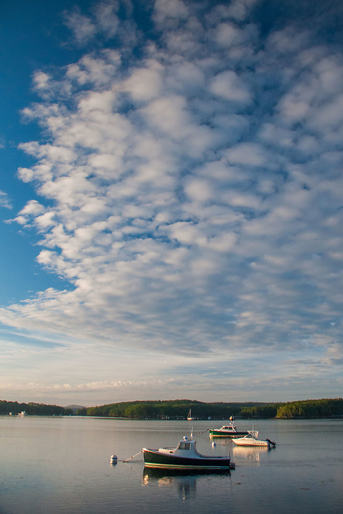 Kittiwake and Friends Under Clouds, Castine, Maine, US