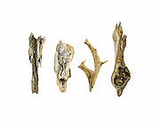 Four pieces of Maine driftwood on a white background.