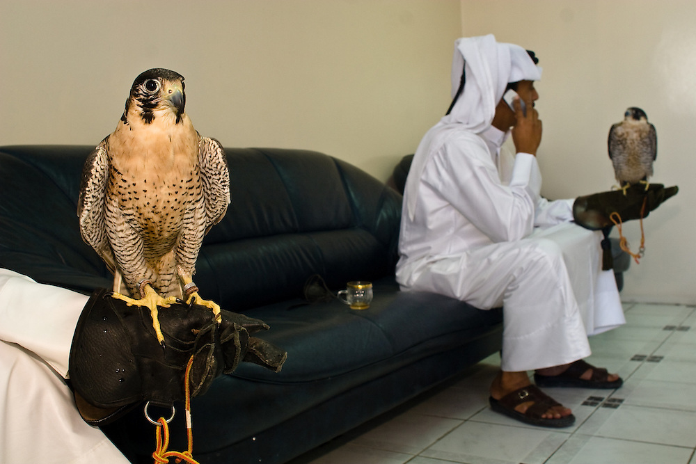 The waiting room of the Falcon Hospital in Doha, Qatar.