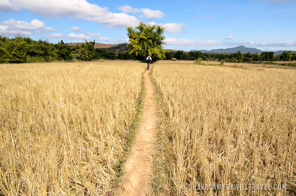 A narrow, elevated dirt path leads through the rice paddies near Site 3 in the Plain of Jars, Laos.