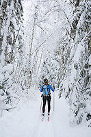 Female cross country skier admiring snowy forest Mt Baker National Forest Washington USA.