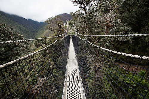Canopy walkway at Wayqecha Biological Reserve on the Eastern slopes of the Peruvian Andes. Cloud & Canopy walkway Wayqecha Biological Reserve Peru | Gabby Salazar ...