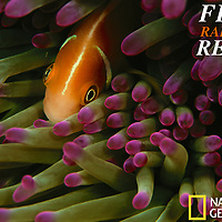 Nat Geo: Fiji's Rainbow Reefs