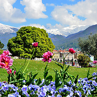 Flowers and Snow-capped Alps in Lugano, Switzerland<br />