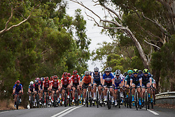 The peloton approach at Stage 1 of 2020 Santos Women's Tour Down Under, a 116.3 km road race from Hahndorf to Macclesfield, Australia on January 16, 2020. Photo by Sean Robinson/velofocus.com