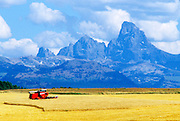 THIS PHOTO IS AVAILABLE FOR WEB DOWNLOAD ONLY. PLEASE CONTACT US FOR A LARGER PHOTO.. Idaho. Fremont County. Eastern Idaho with Teton Mts in background. Harvesting barley