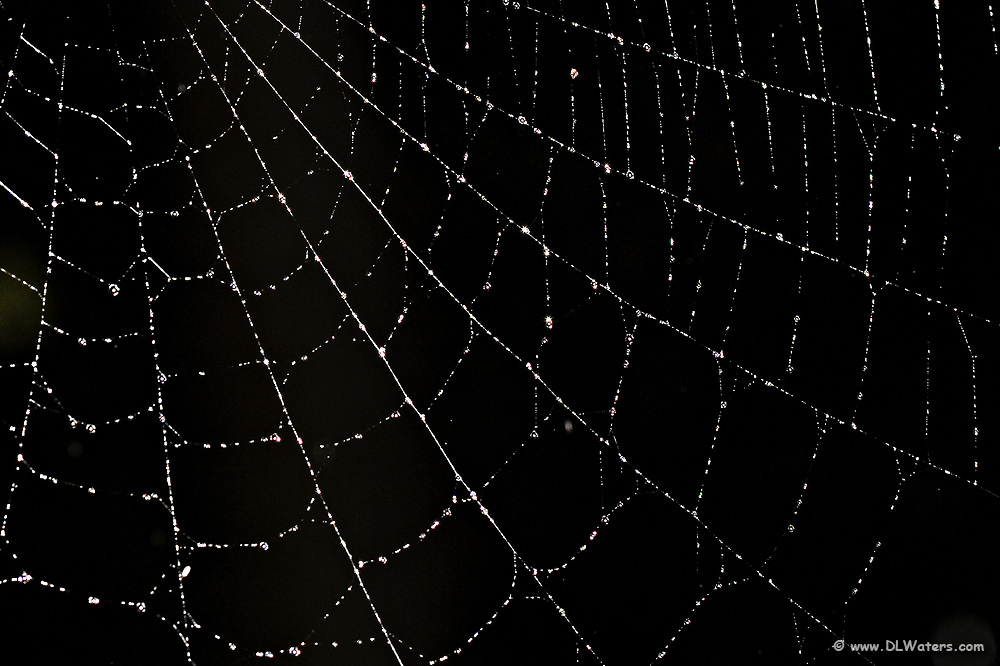 Spiderweb sparkling with due drops.