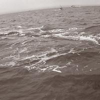 Sailboards on San Francisco Bay