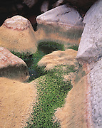 Exotic patterns form from moss-covered pools as the water evaporates from the Tuckup Canyon (river mi. 164), Grand Canyon Natl. Park, Arizona..Subject photograph(s) are copyright Edward McCain. All rights are reserved except those specifically granted by Edward McCain in writing prior to publication...McCain Photography.211 S 4th Avenue.Tucson, AZ 85701-2103.(520) 623-1998.mobile: (520) 990-0999.fax: (520) 623-1190.http://www.mccainphoto.com.edward@mccainphoto.com.
