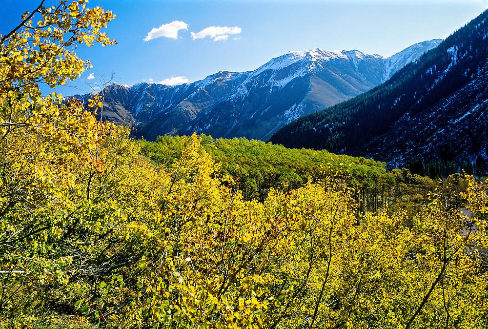 Fall foliage near Maroon Bells, near Aspen, Colorado USA