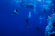 Diving on the North Wall, Grand Cayman