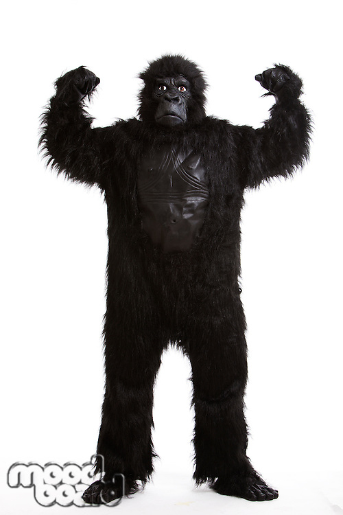 Young man in a gorilla costume flexing muscles against white background
