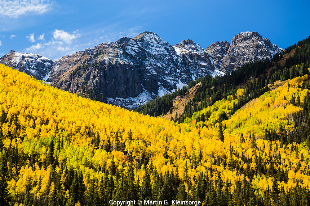 Turning of the aspen trees during the autumn season. Below Yellow Mountain of the San Juan Mountains.  Near Ophir, Colorado.