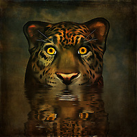 One of the most arresting images in this collection, Big Pussy is a story of big eyes. These are some wide, alert eyes that are staring back out at you. They come from a big cat, and his head is already above the surface of the water he is. This piece uses sharp, brilliant colors to bring those eyes to life. They are completely absorbed by your presence. The question is whether or not this is a good thing. You can decide that for yourself! Available in canvas, metal, acryl, or framed prints, these pieces can also be enjoyed as interior products like duvet covers.