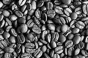 Coffe beans, Panama, central America<br /> <br /> Open Edition giclee prints<br /> Exhibition fiber paper 325 Gsm.<br /> Size: 16 x 20 in / $ 230.00<br /> Size: 20 x 30 in / $ 375.00<br /> Size: 30 x 40 in / $ 500.00<br /> Size: 40 x 60 in / $750.00