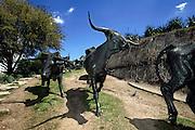 Dallas, TX, USA, April 1st 2005: Texas Longhorn Cattle Sculpture at Pioneer Plaza.<br /> <br /> Photo: Orjan F: Ellingvag/ Dagbladet/ Getty *** Local Caption ***
