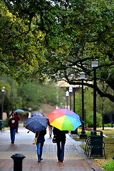 Texas A&M senior's Elizabeth Garza, left, and Asia Gillespie hide from the rain under umbrellas while walking back from lunch down Military Walk Friday on campus.  Rain and cold temperatures continued over the Brazos Valley for a second straight day but sunny weather and a warm-up are forecasted for the weekend.