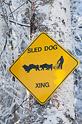 Dog mushing in Alaska. <br /> <br /> Photographer: Christina Sj&ouml;gren<br /> Copyright 2018, All Rights Reserved