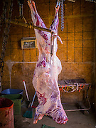 16 JUNE 2012 - GILA RIVER INDIAN COMMUNITY, PHOENIX, AZ: A freshly slaughtered sheep hangs in the killing room on Ibrahim Swara-Dahab's goat farm. Swara-Dahab, 57, left Somalia in 1993. He lived in a refugee camp in Kenya for five years before coming to the United States and settled in the Phoenix area in 2006. He got a $10,000 loan from the micro-enterprise development program for refugees. The money allowed him to buy dozens of goats and sheep, each worth $130 to $200, turning his one-sheep operation into a money-making, time-consuming herd. He now operates a full time goat ranch and slaughter house. He slaughters his goats and sheep in the Muslim halal tradition. Most of his customers are fellow refugees and Muslims who prize goat meat or eat only meat slaughtered according to halal traditions. His butchering operation is on the Gila River Indian Community, near Laveen, AZ, just southwest of Phoenix.    PHOTO BY JACK KURTZ