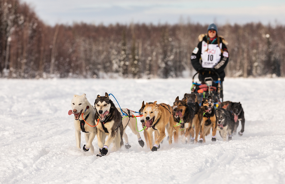 Musher Anna Berington after the restart in Willow of the 47th Iditarod Trail Sled Dog Race in Southcentral Alaska.  Afternoon. Winter.