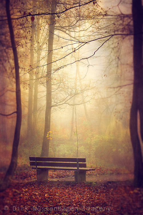 Single bench inn a park on a moody misty November morning