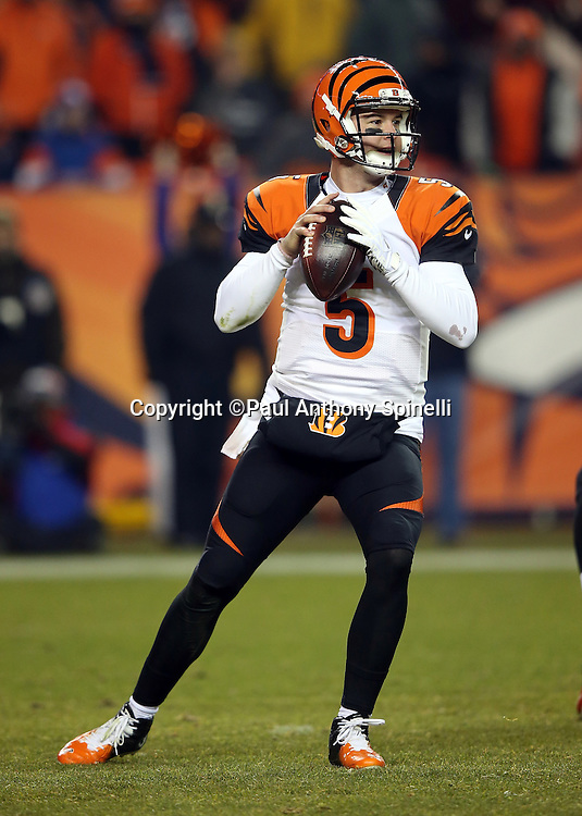 Cincinnati Bengals quarterback AJ McCarron (5) drops back to pass during the 2015 NFL week 16 regular season football game against the Denver Broncos on Monday, Dec. 28, 2015 in Denver. The Broncos won the game in overtime 20-17. (©Paul Anthony Spinelli)