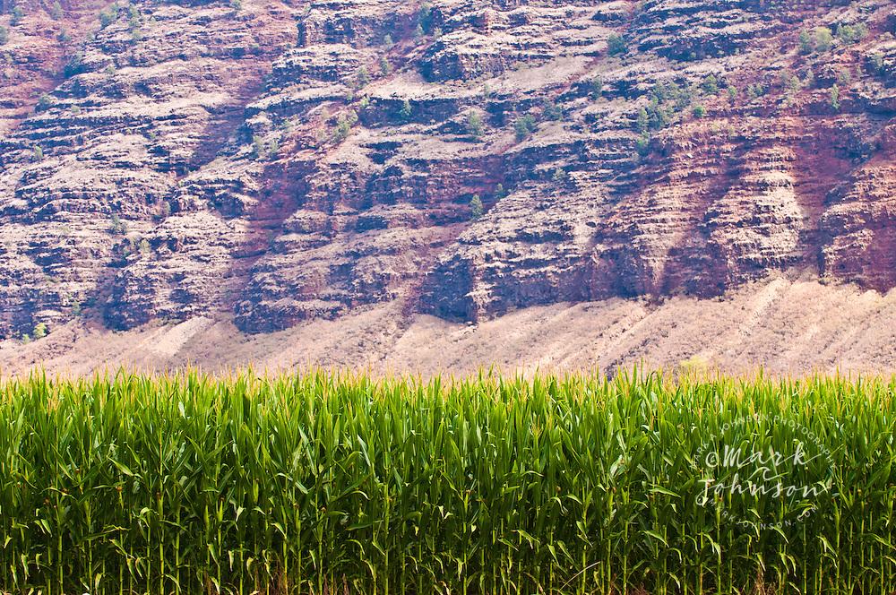 Seed corn, Polihale, Kauai, Hawaii