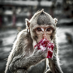 The Monkey Temple of Lopburi, Thailand
