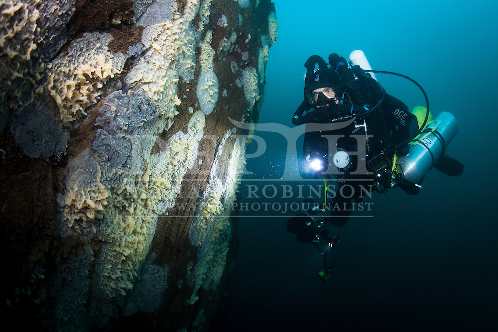 Rebreather diver Ian Skipworth inspects freshwater sponges in Lake Taupo, New Zealand..Saturday 26 January 2013.Photograph Richard Robinson © 2013.Dive Number: 439.Site: Motutakiko Island, Taupo.Dive Buddy: Ian Skipworth.Temperature: 11.8-19  Degrees Celsius..Rebreather: Inspiration Vision. Total Time On Unit: 238:33 hh:mm.Maximum Depth: 70.9 meters.Bottom Time: 86 minutes.Mix: 16:50.CNS: 46%.OTU: 40%.Bottom Time to Date: 28,390 minutes.Cumulative Time: 28,476 minutes