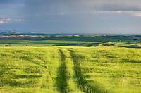 Tire tracks running through a grassy meadow in the Palouse region of the Inland Empire of Washington