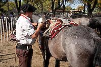 GAUCHO PREPARA LA MONTURA A UN CABALLO, FERIA ESPECIAL EN CARMEN DE ARECO, PROVINCIA DE BUENOS AIRES, ARGENTINA
