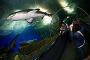 Underwater World. Sharks seen from the viewing tunnel.