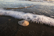 A wave washes over a sanddollar on the beach in Galveston, Texas.